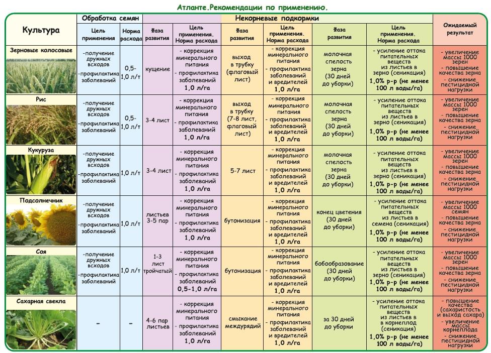 Применение и рекомендации по удобрению-иммунопротектору Атланте